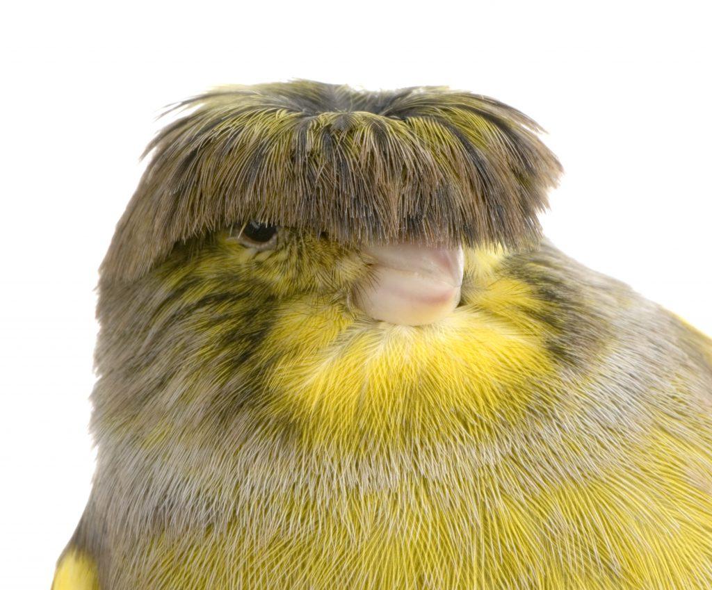 Cekuls nenosedz putna acis, kā pirmajā brīdī šķiet.