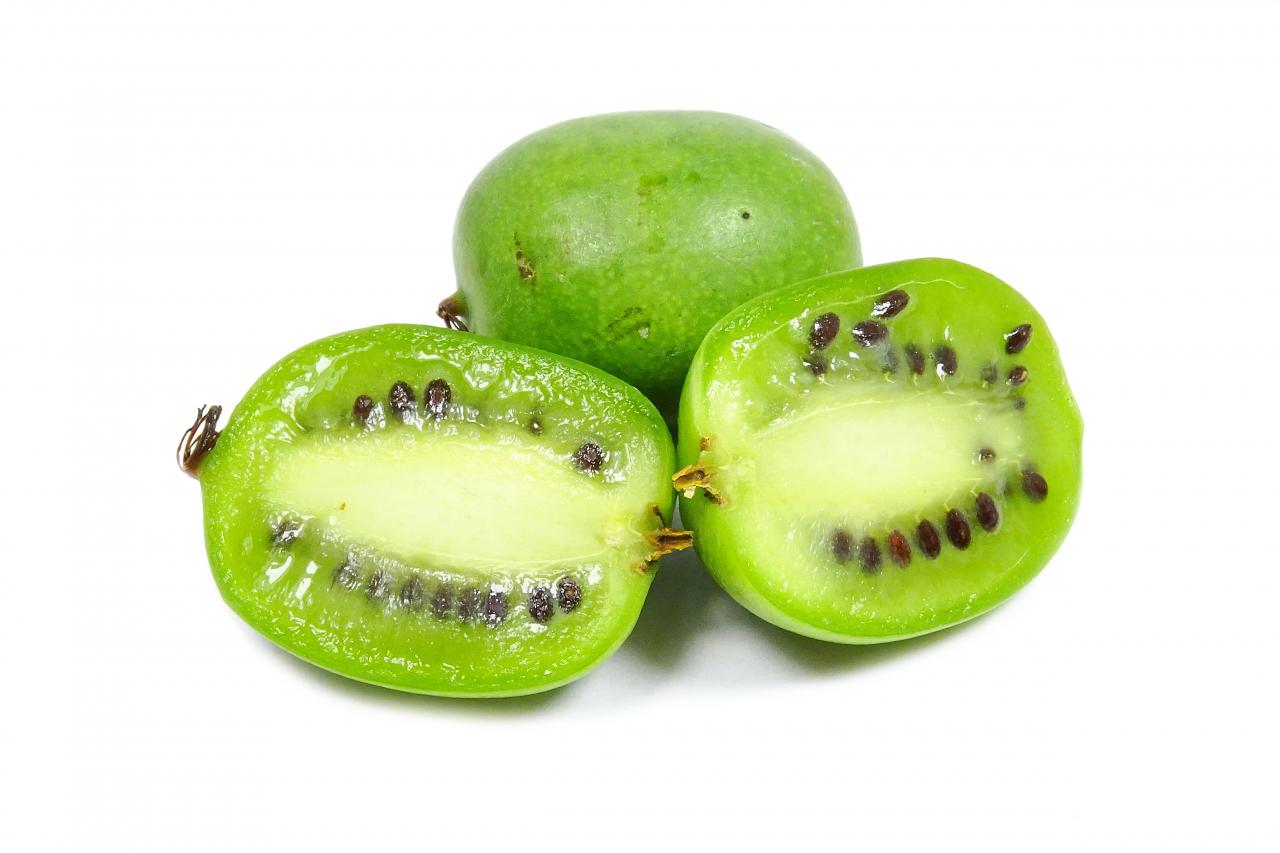 Augļi ir strupi cilindriski, 2–3 cm gari un 1 – 1,5 cm plati. Gatavi augļi tūdaļ nobirst.