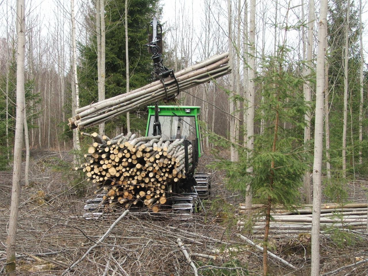 Meža kopšana īpašniekam nozīmē maksimāli iespējamo ienākumu gūšanu visā meža attīstības un augšanas ciklā. Proti, koksni var iegūt ne tikai kaut kad nākotnē, bet jau tagad, veicot kopšanas cirtes un tādējādi pie viena arī uzlabojot nākotnes meža ekonomisko vērtību un kvalitāti.