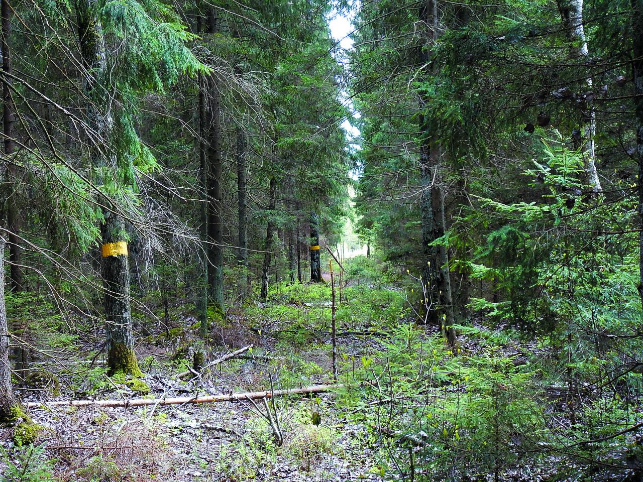 Jārēķinās, ka pastāvīgi gaismu tuneļā galā (lasi – meža robežas galā) varēs saskatīt tikai tad, ja vismaz reizi pāris gados robeža tiks attīrīta no krūmu aizzēluma.