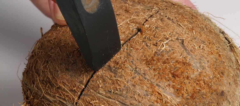 3. Uzmanīgi paklaudzina ar āmuriņu visapkārt čaumalai, līdz dzirdama plīsuma skaņa. Šajā vietā stingrāk padauza ar āmuriņu, līdz rieksts pāršķeļas.