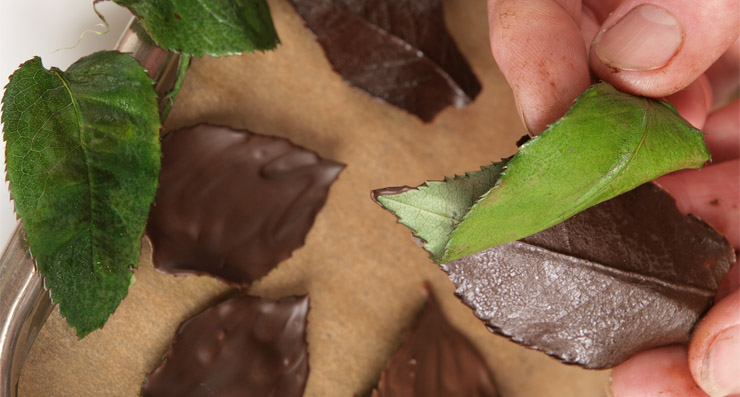 šokolādes rožu lapas