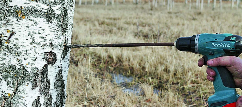 Kokā urbj 3–4 cm dziļi. Urbuma vietai jābūt augstākai par pudeles kaklu.