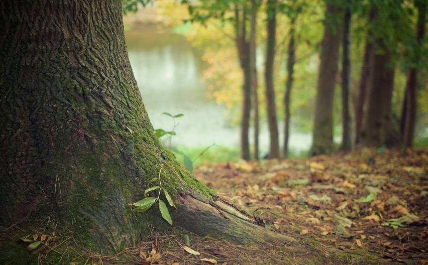 Zini, kāds mežs tev ir!