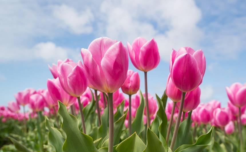 Kas maijā jādara puķu dārzā?