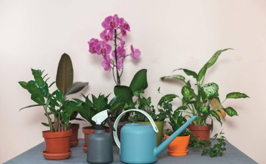 Istabas augi pēc vasaras <em>atvaļinājuma</em> atgriežas telpās. <strong>Kā par tiem parūpēties?</strong>