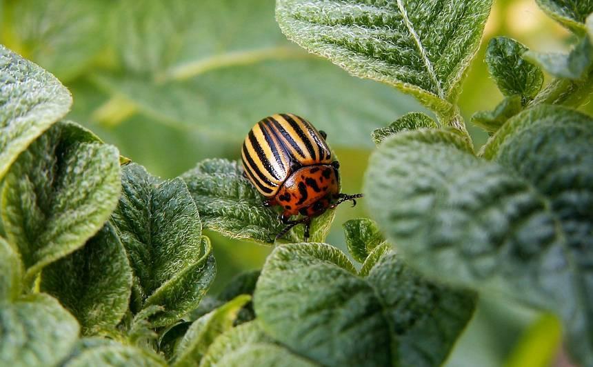 Vienkārši un iedarbīgi! <strong>Tautas metodes</strong> pret augu slimībām un kaitēkļiem