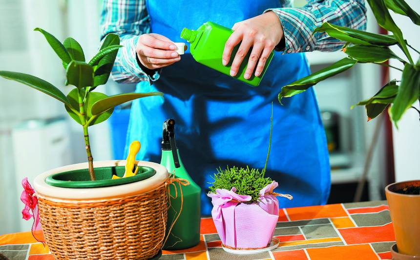 Pavasarī visiem vajag vitamīnus — arī augiem. <strong>Kā pareizi mēslot</strong>?