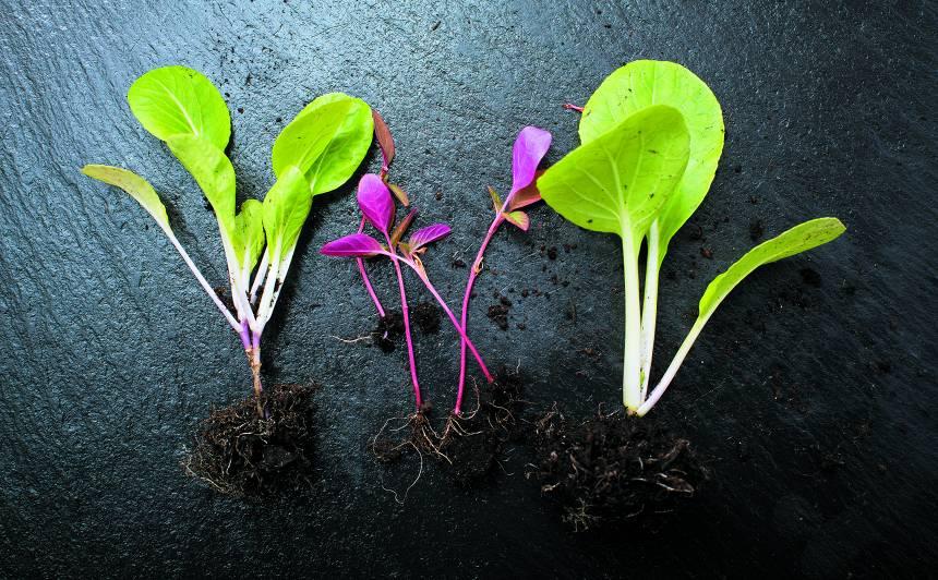 <strong>Kādus stādus</strong> vērts audzēt pašiem?