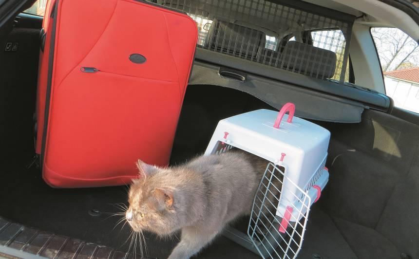 Ceļojums ar <strong>auto un mājdzīvniekiem</strong> – kas jāņem vērā?