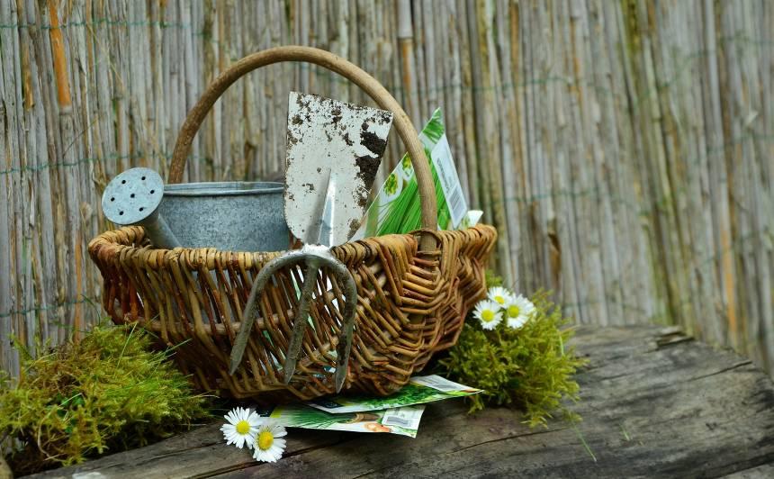 Kas maijā jādara dārzeņu dobē?