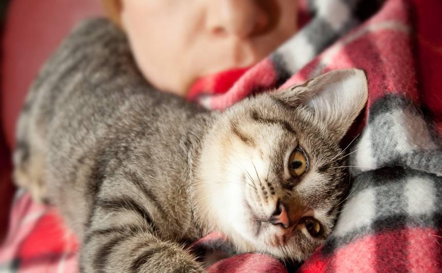 Kāpēc kaķis guļ <strong>uz saimnieka galvas</strong>?
