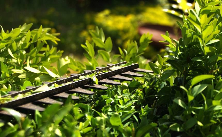 <strong>Kā ieziemot</strong> dzīvžoga šķēres, lapu pūtējus un augsnes irdinātājus, frēzes?