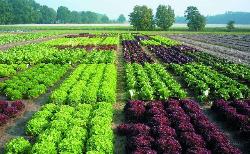 <strong>Pavasara garša</strong> – ļoti dažādi un krāsaini salāti