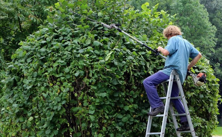 Kas maijā jādara ar kokiem un krūmiem?