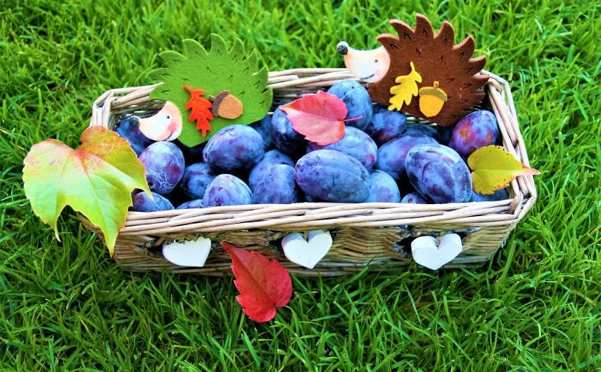 Kas septembrī jādara <strong>augļu un ogu dārzā?</strong>