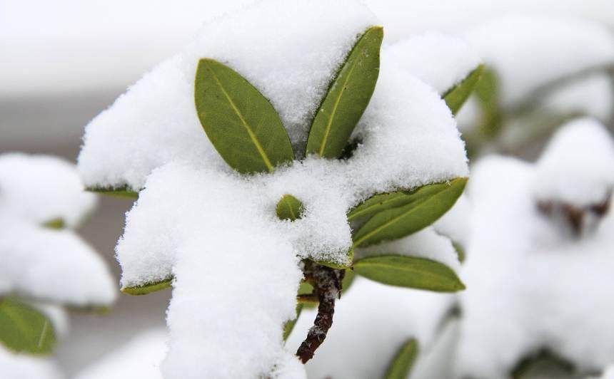 Sargi augus no ziemas saules