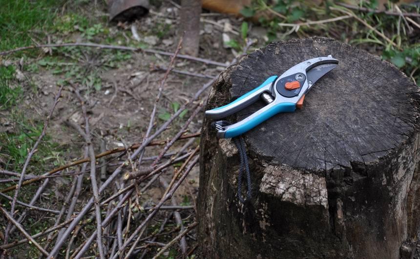 Kas martā jādara ar kokiem un krūmiem?