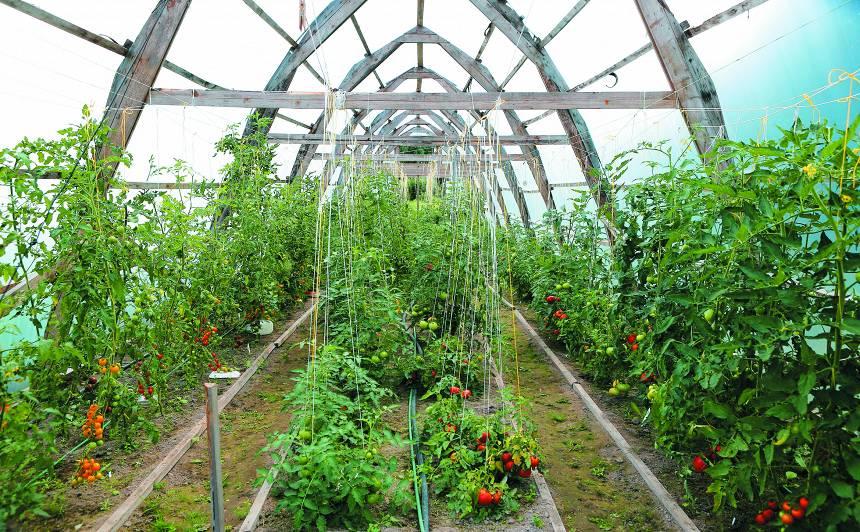 <strong> Pirmā siltumnīca dārzkopim – iesācējam.</strong> Kā izvēlēties un ko tajā audzēt?