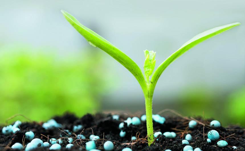 Bagātam dārzamvajag bagātīgu ēdienkarti — <strong>pirmais starta mēslojums pavasarī</strong>