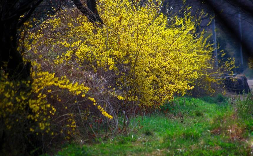Kas jūnijā jādara ar kokiem un krūmiem
