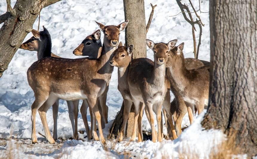 Sargi priedītes no meža dzīvniekiem!