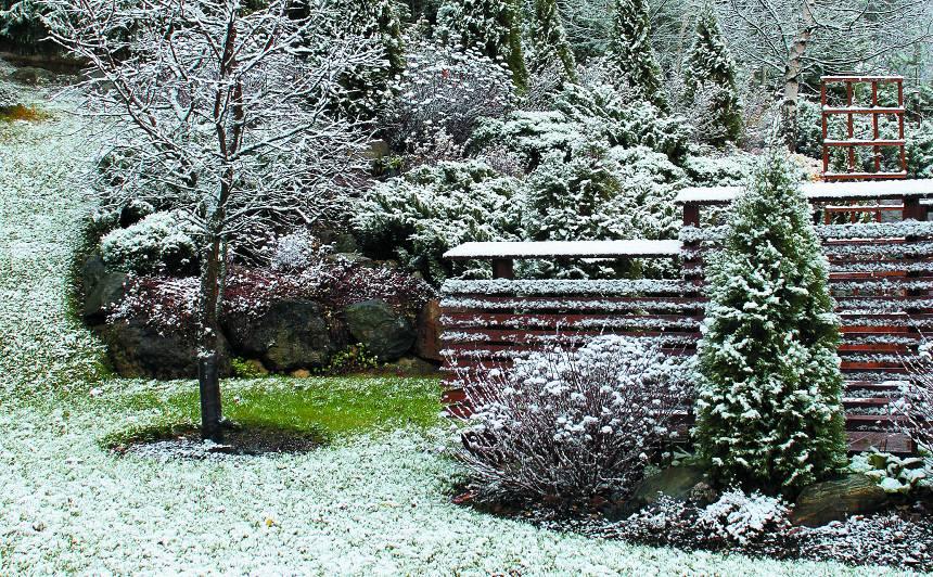 Dārza apgaita <strong>janvārī</strong>