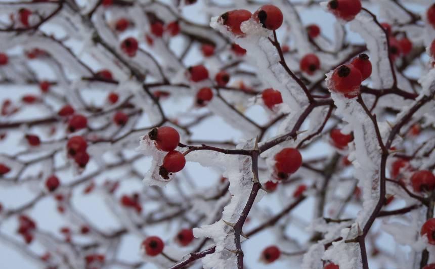 Kas februārī jādara <strong>augļu un ogu dārzā?</strong>