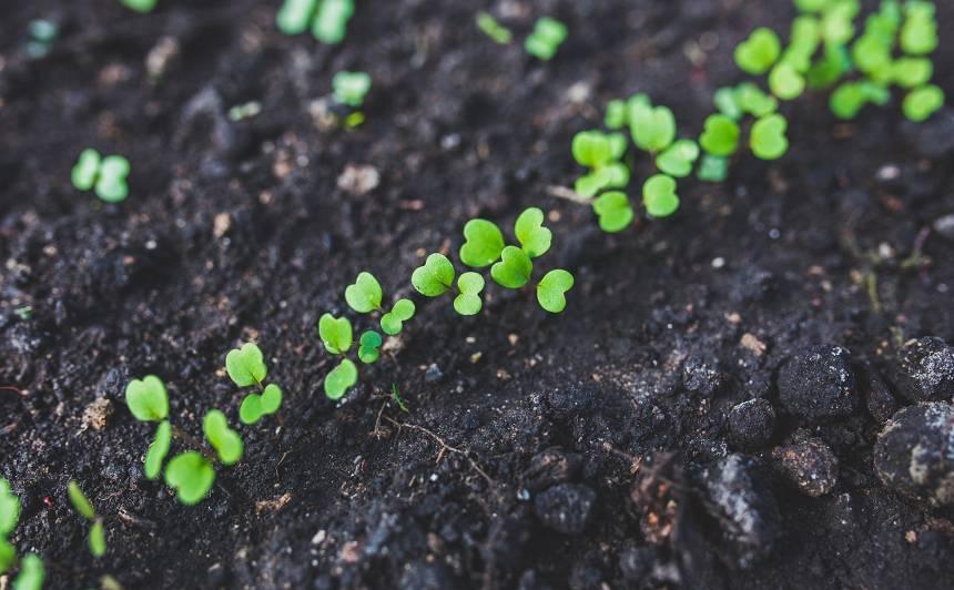 Kas aprīlī jādara <strong>dārzeņu dobē?</strong>