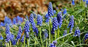 Kas aprīlī jādara <strong>puķu dārzā?</strong>
