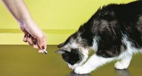 Lāzers kaķiem – rotaļlieta vai <strong>drauds</strong>?