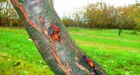 Īstais laiks apkopt kokiem radītās <strong>ziemas brūces</strong>