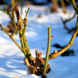 Kas decembrī jādara <strong>puķu dārzā?</strong>