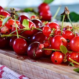 <strong>Jūlija darbi</strong> augļu un ogu dārzā