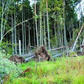 Sāc plānot, kā <strong>apsaimniekosi mežu!</strong>