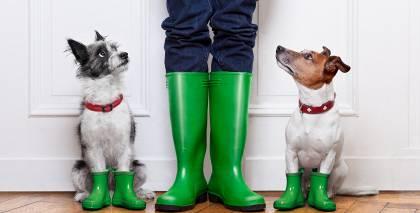 Vai <strong>lietus un suņa pastaiga</strong> ir savienojami?