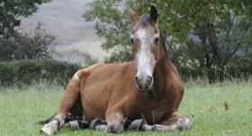 Pēc kā var noteikt, <strong>cik vecs ir zirgs?</strong>
