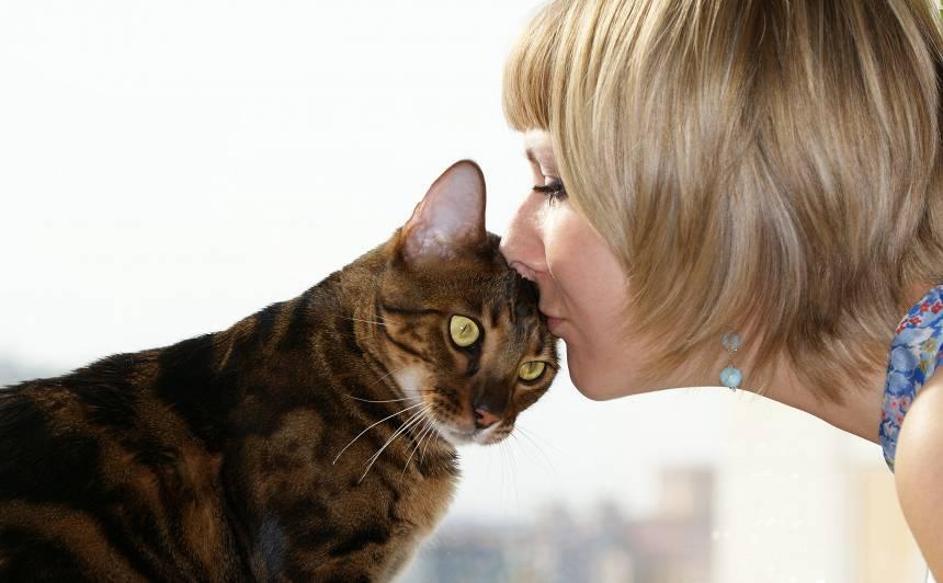 7 pazīmes, ka <strong>kaķis tevi mīl</strong>