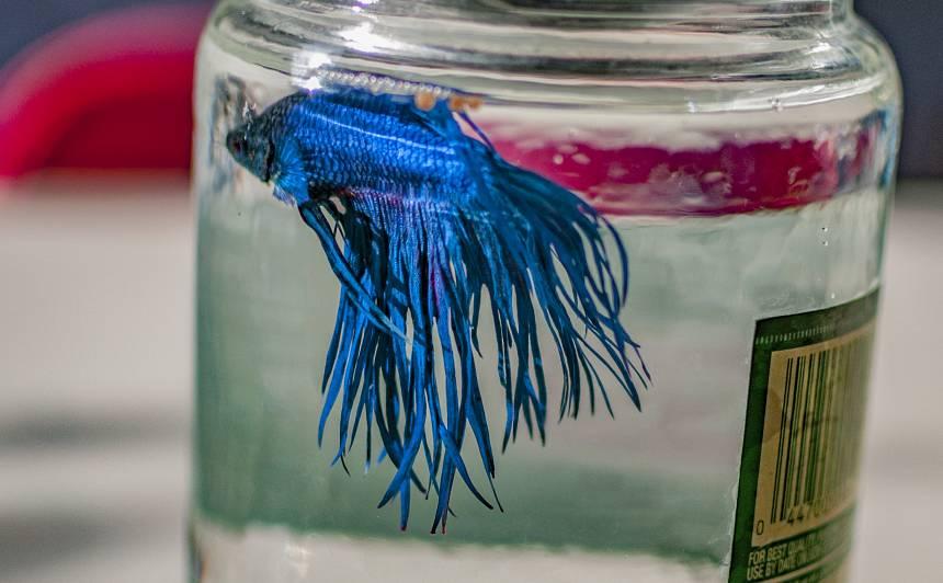 Vai zivis var <strong>mainīt dzimumu?</strong>