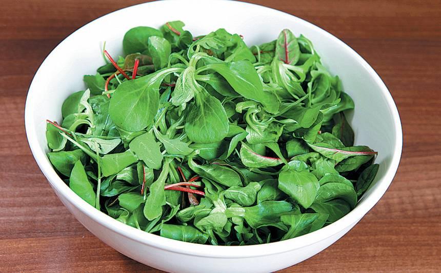 Mangolda lapu salāti