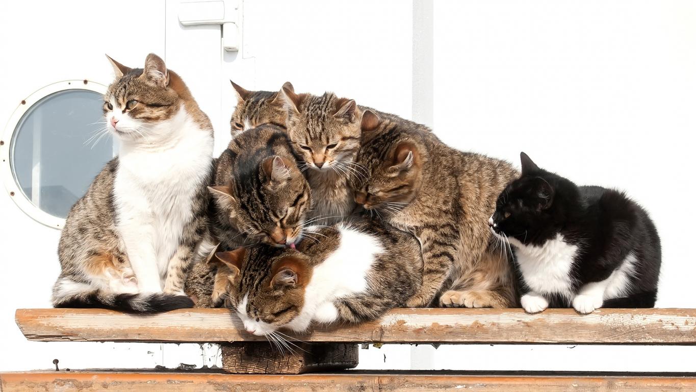 Vai kaķu mājās var būt <strong>par daudz?</strong>