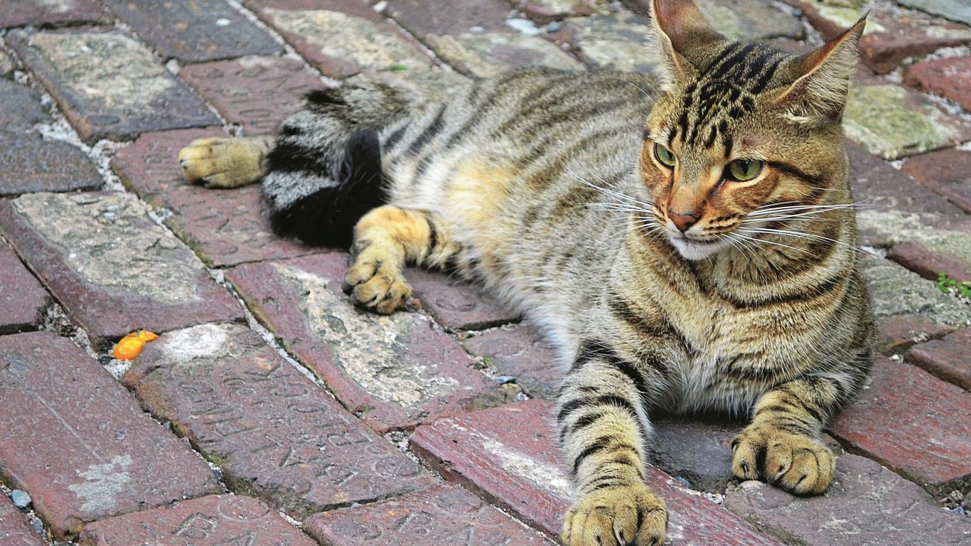 Polidaktilija jeb kaķi ar <strong>sešiem pirkstiem</strong> - tas var būt uz <strong>veiksmi!</strong><br />