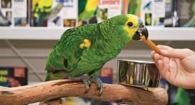 Kā pareizi lasīt informāciju uz <strong>putnu barības iepakojuma?</strong><br />