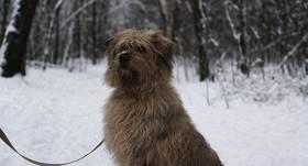Patriks - suns, kuru <strong>neviens neņem</strong>