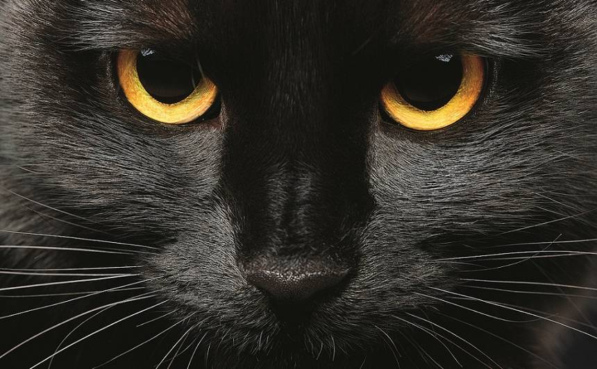 5 populārākās <strong>melno kaķu</strong> šķirnes