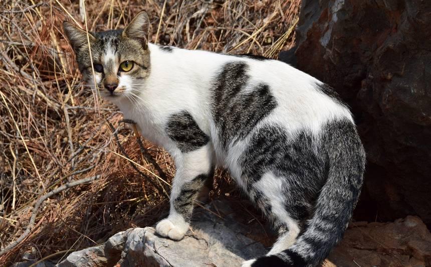Kā rūpēties par <strong>aklu</strong> kaķi?