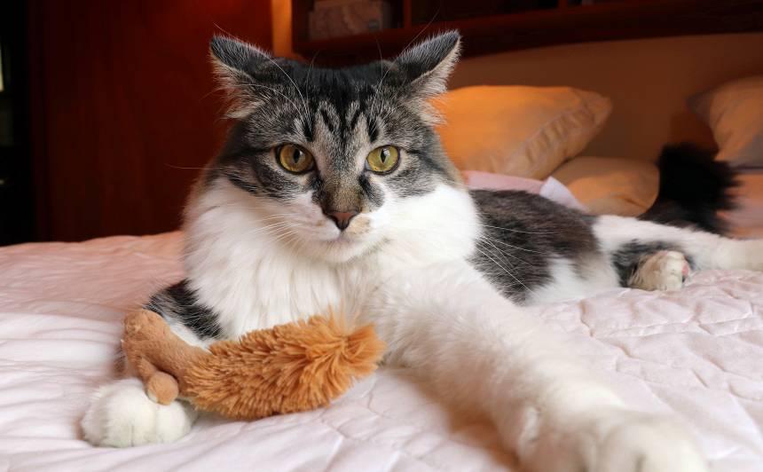 Ko darīt ar <strong>hiperaktīvu kaķi?</strong>
