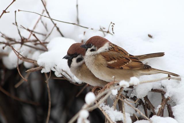 <strong>Putnu pilns dārzs</strong> jeb pašgatavoti gardumi lidoņiem ziemas spelgonī