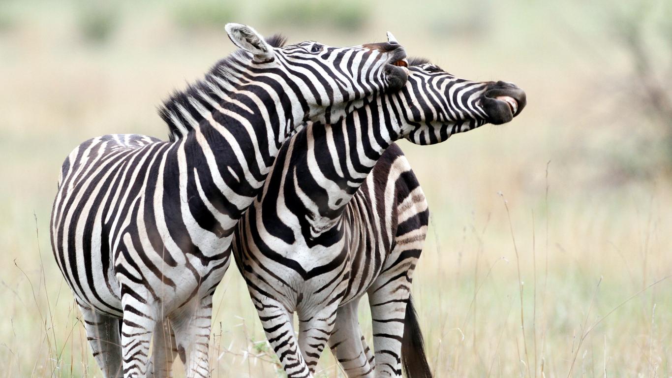 Vai dzīvnieki spēj <strong>mīlēt viens otru?</strong>