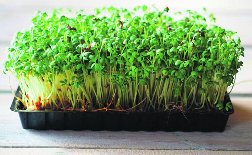 <strong>10 ieteikumi</strong>, lai mikrozaļumi uz palodzes aug un zaļo